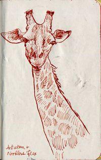 Noodlersflex-antietam-giraffe